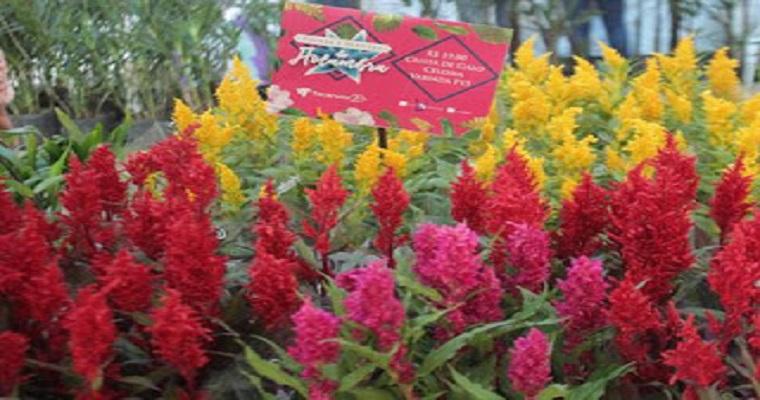 Festival de Flores e Plantas de Holambra