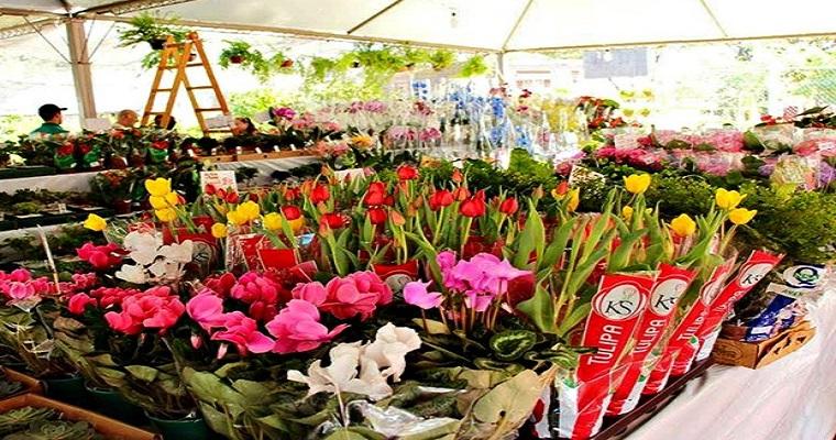 Pátio do Carmo recebe o Festival de Flores de Holambra