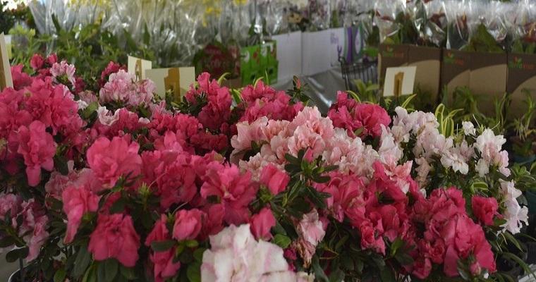 Festival das Flores e Plantas de Holambra segue até o dia 16